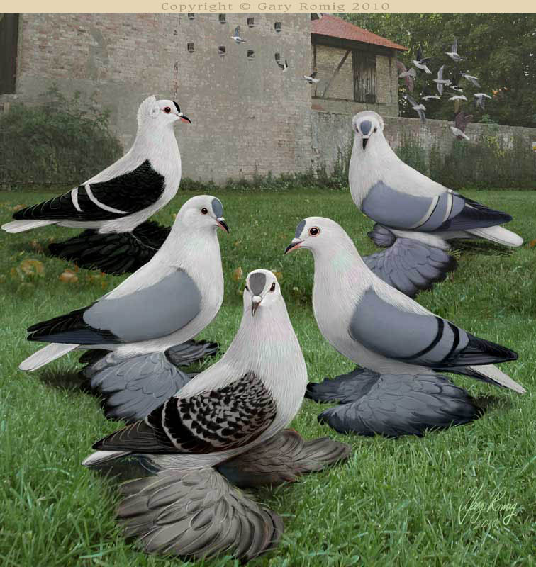Color Pigeon Art by Gary Romig